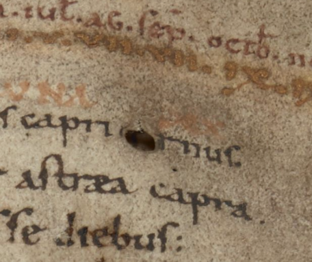A detail from an Anglo-Saxon calendar, showing a flaw in one of the manuscript's parchment pages, used to make the letter O in the word 'cornus'.