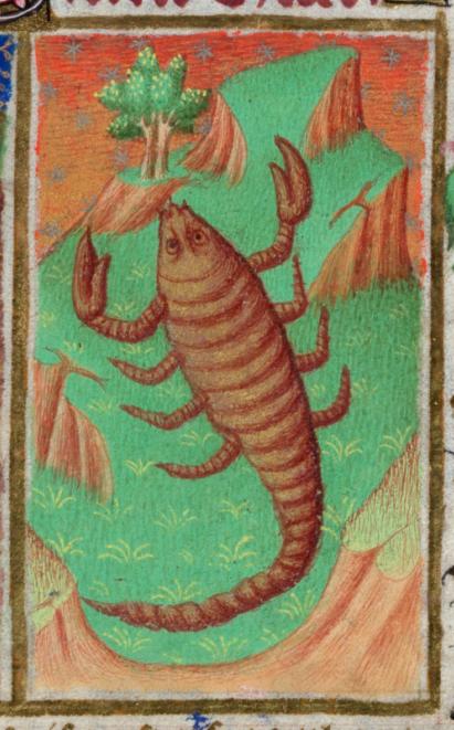 Detail of Scorpio